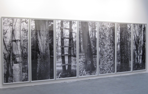 24 Tree Studies exhibition at the Heckscher Museum