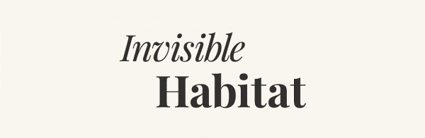 Morgan O'Hara Interviewed by Invisible Habitat