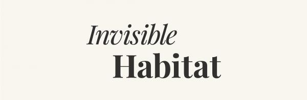 Morgan O'Hara Interviewed by Invisible Habitat