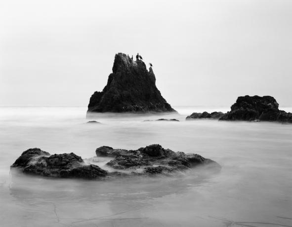 Jasmine Swope: Our Ocean's Edge at the Laguna Art Museum