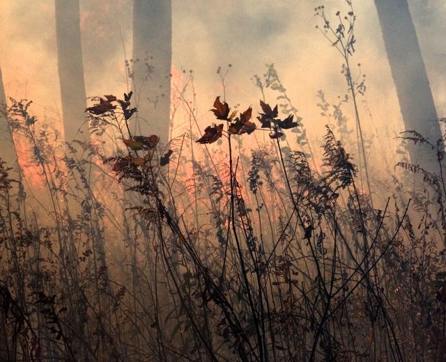 Jane Fulton Alt, fire, landscape, burning
