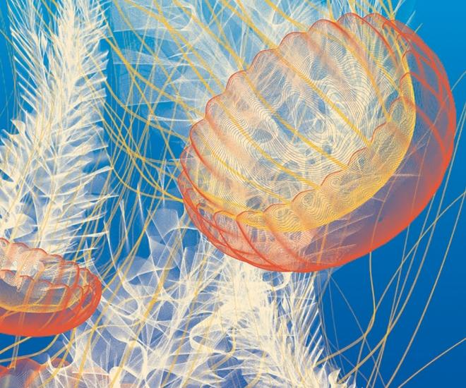 Sea Lace Edition