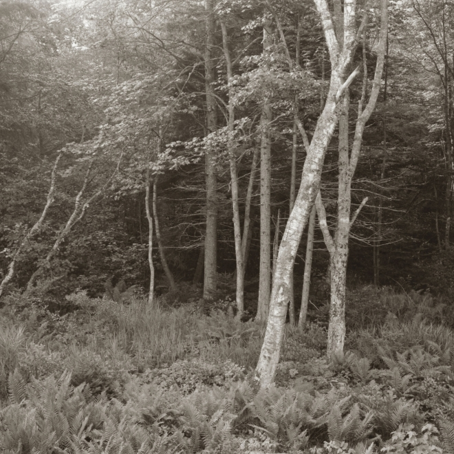 George Tice and Andrew Wyeth: Parallel Visions, The Farnsworth Art Museum, Rockland, Maine