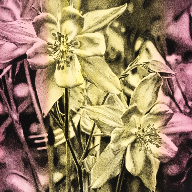 a charcoal drawing of flowers on a pink and yellow toned, striped background by Andy Mister