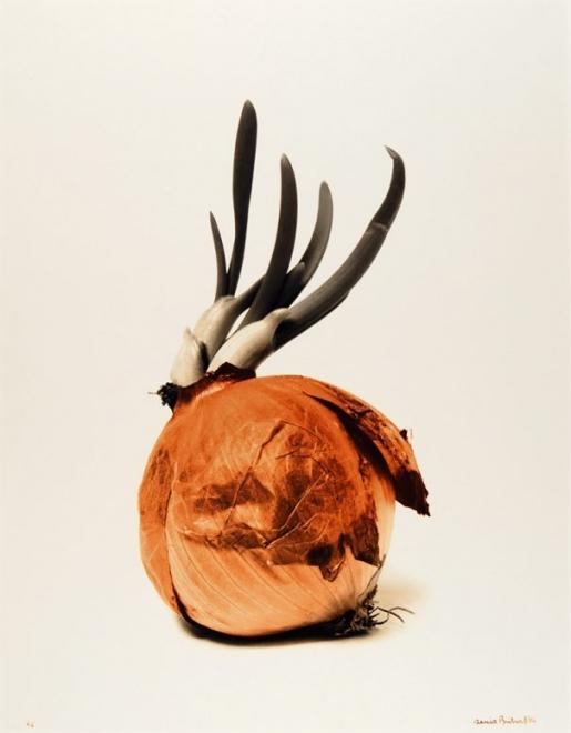 John's Bailiwick: Denis Brihat's Humble Onions