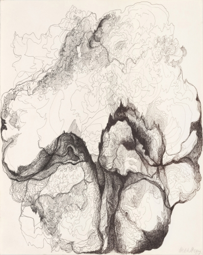 pen and ink drawing of a cabbage