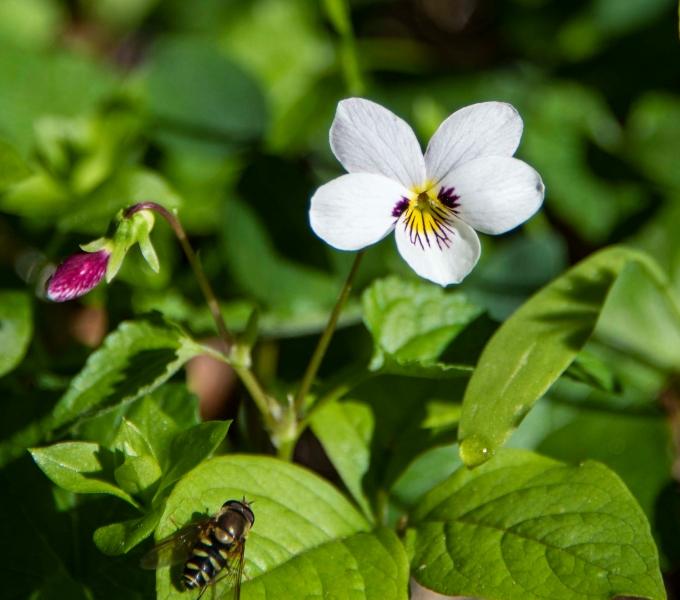Preserve & Open Space Wildflowers
