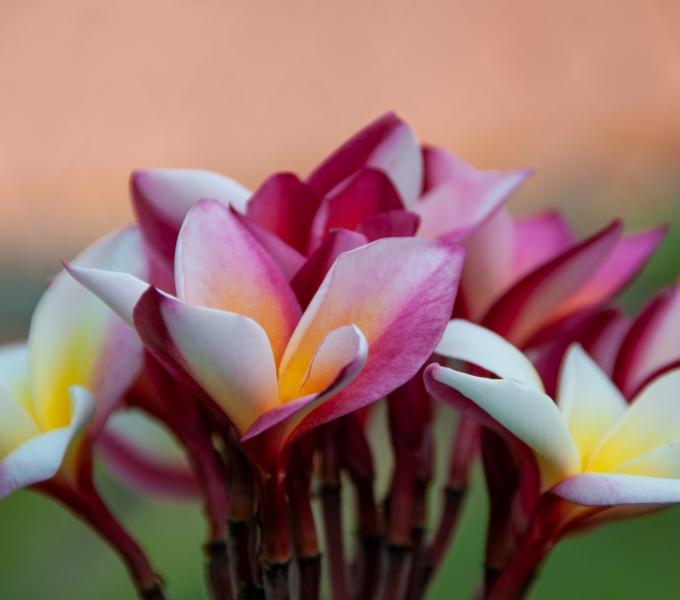 Tahitian Flora