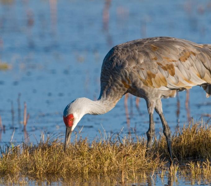 Cranes, Flamingos, Spoonbills, Storks