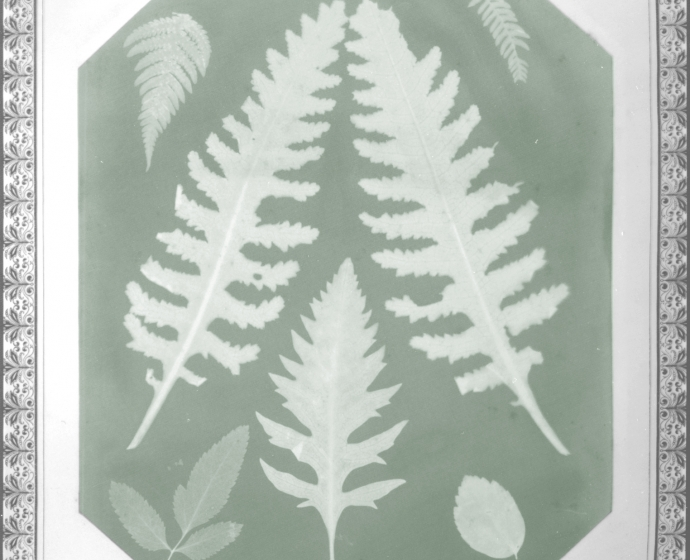 Amelia E. BERGNER (American, 1853-1923) Seven botanical specimens, circa 1877 Photogram on chromate based printing-out paper, 28.9 x 22.9 cm