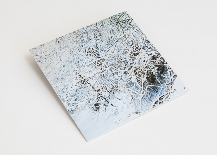 Kate Bright: Between the Woods
