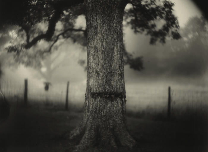 Sally Mann: A Thousand Crossings | Peabody Essex Museum