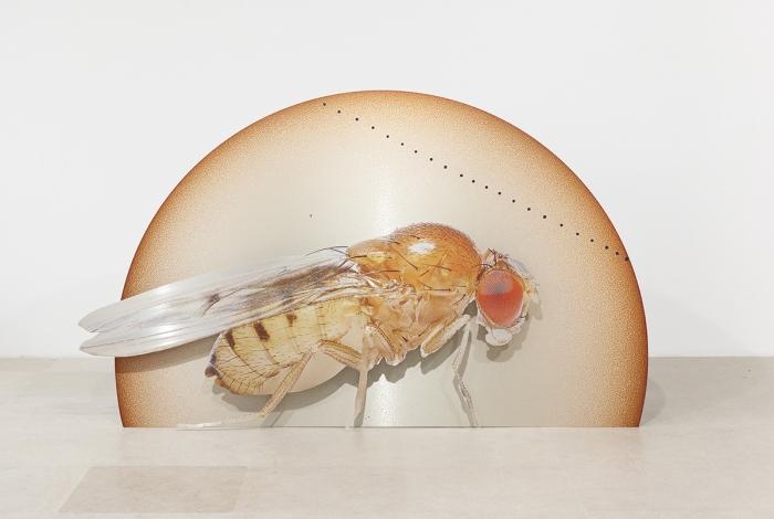 Katja Novitskova Storm Time Approximation (Mercury Transit, Drosophila Melanogaster), 2016 Digital print on 2 layers of aluminum, cutout display  58 1/4 x 96 3/8 x 12 inches (148 x 244.8 x 30.5 cm)