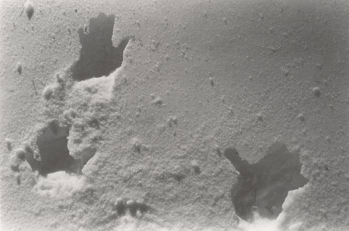 Lutz Bacher, Snow Hands, 2012