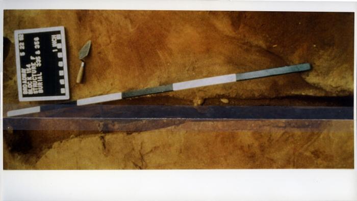 Michaela Meise  Bones, 2006                                                                      Inkjet prints, archival mending tape  Five parts  Dimensions variable