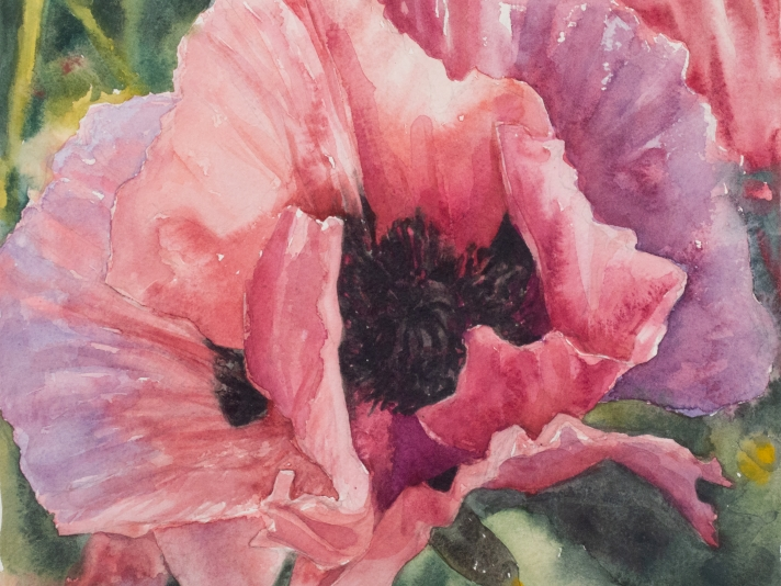 Eileen Goodman, Single Poppy, Watercolor