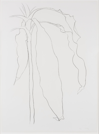Ellsworth Kelly, Dracena I, from Series of Plant and Flower Lithographs, 1983-85