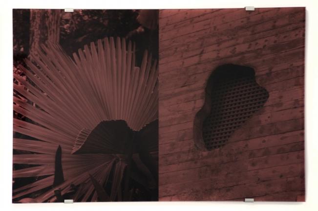 Sesc Pompéia, Trachycarpus Fortunei, Veronika Kellndorfer, Christopher Grimes Gallery