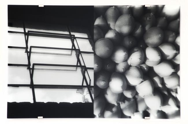 Sesc Pompéia, Ceiba Pentranda, Veronika Kellndorfer, Christopher Grimes Gallery