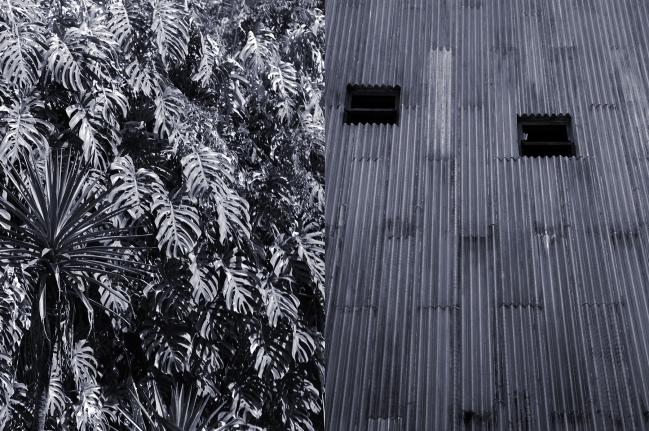 Casa do Benin, Philodendron, Veronika Kellndorfer, Christopher Grimes Gallery