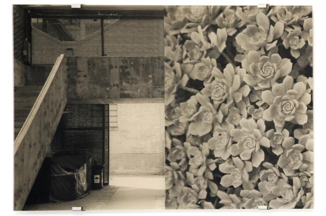Sesc Pompéia, Echeveria Prolifica, Veronika Kellndorfer, Christopher Grimes Gallery