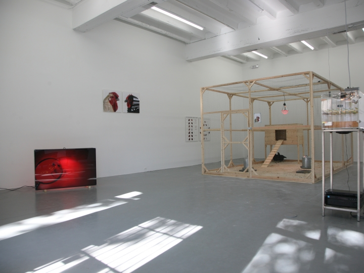 KOEN VANMECHELEN Cosmopolitan Chicken Project (DC) 2009. Installation view: Conner Contemporary Art.