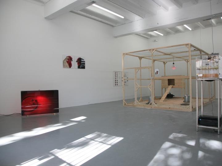 KOEN VANMECHELEN Cosmopolitan Chicken Project (DC) 2009. Installation view: Conner Contemporary Art.