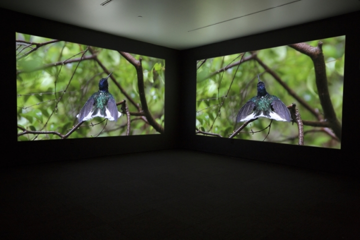 Janet Biggs, The Persistence of Hope (video still), 2015.