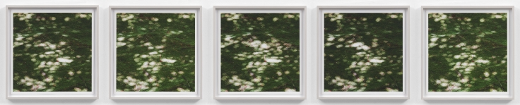 SPENCER FINCHInvisible Breeze (Ryoanji)2017Five archival inkjet photographs17 x 17 (each)43.2 x 43.2 cm (each)Editon of 5 + 1APJCG9440