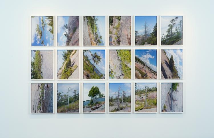TREE CORRECTIONS | INSTALLATION VIEW | UNIVERSITY OF TORONTO ART CENTRE | 18 CHROMOGENIC PRINTS | 2013