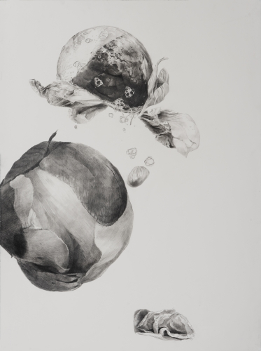 Dead Flowers 3, graphite on paper, 30 x 22 1/2 in, JR039