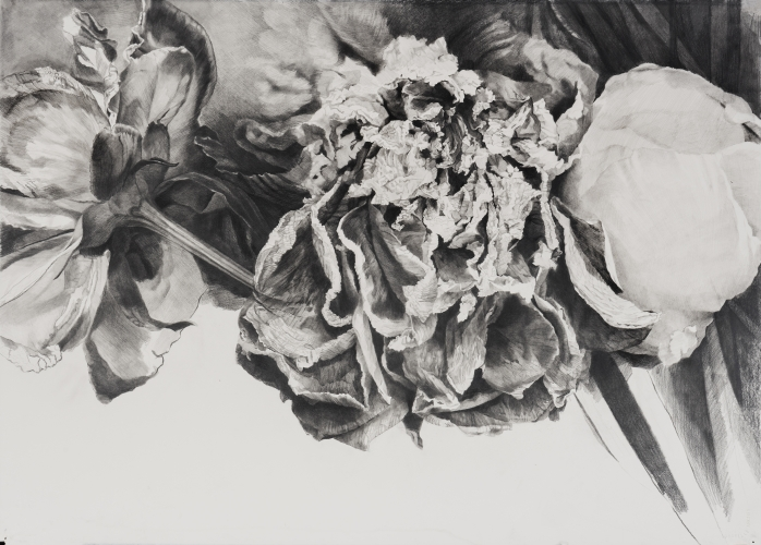 Dead Flowers 1, graphite on paper, 26 1/4 x 36 in, JR037