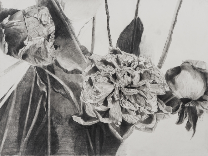 Dead Flowers, graphite on paper, 18 x 24 in, JR036