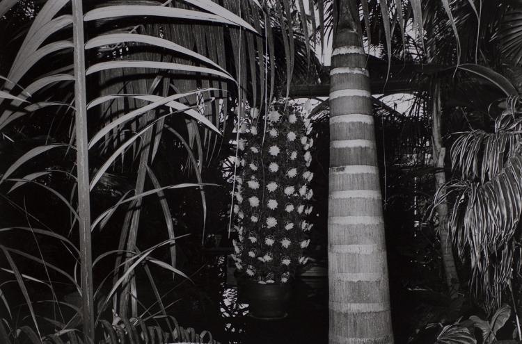 PETER MORIARTY  New York Botanical Gardens, Bronx, NY (crysanthamums) 2012