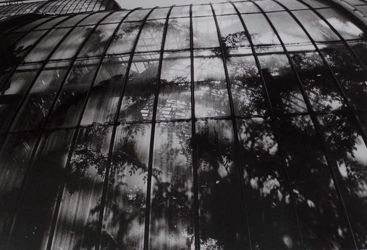 PETER MORIARTY  Royal Kew Gardens, UK (palm house) 2010