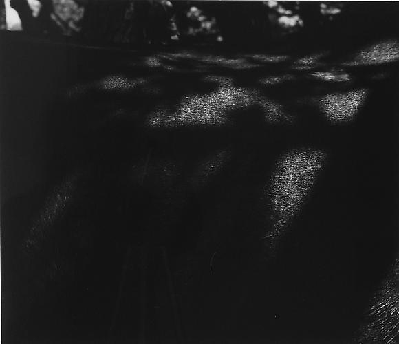 AARON SISKIND  Old Horse 46 1971