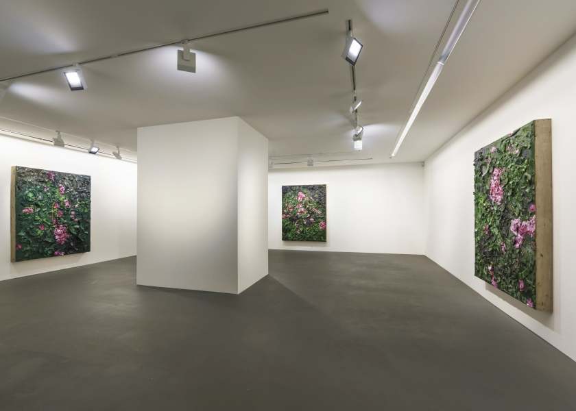6 Rose Paintings, Vito Schnabel Gallery, St. Moritz, 2016