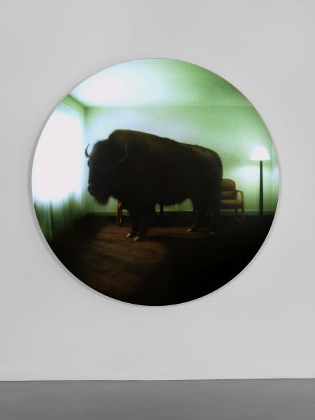 doug aitken - buffalo