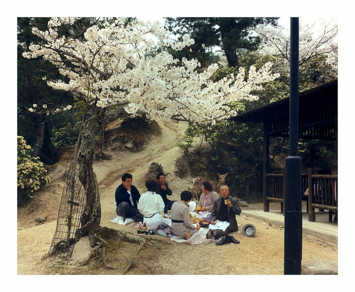 Leo Rubinfien- Cherry Blossom Viewing at Miyajima