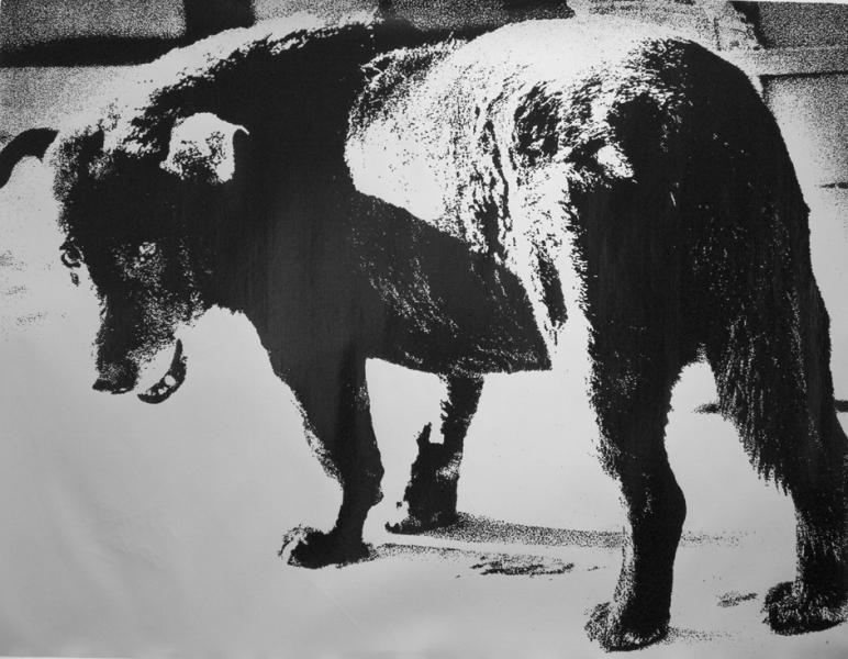 Daido Moriyama - Stray Dog