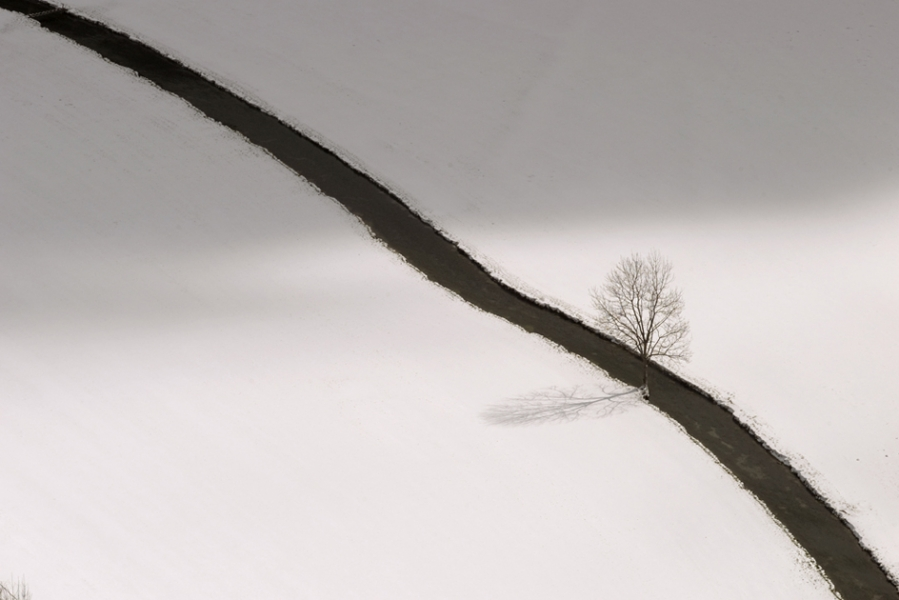 Norbert Rosing- Winter Landscape