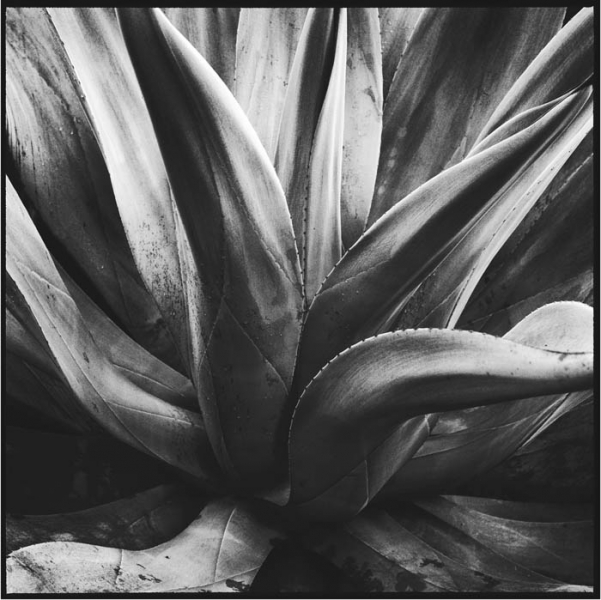 Mark Seliger- Agave