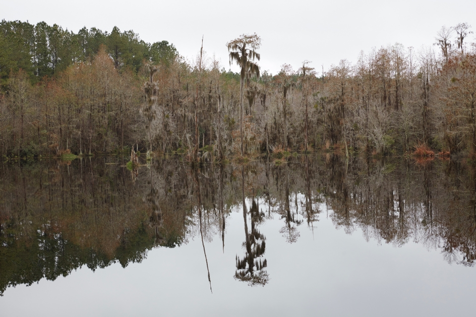 CATHERINE OPIE, Untitled #7 (Swamps), 2019