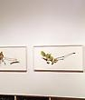 "Video of the ""David Morrison: Spring Microcosm"" exhibition opening! -"