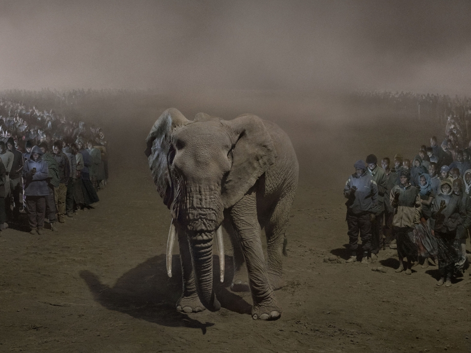 Nick Brandt's 'This Empty World' Shows Lions, Elephants—and Humans—In Industrial Hellscapes (Daily Beast)