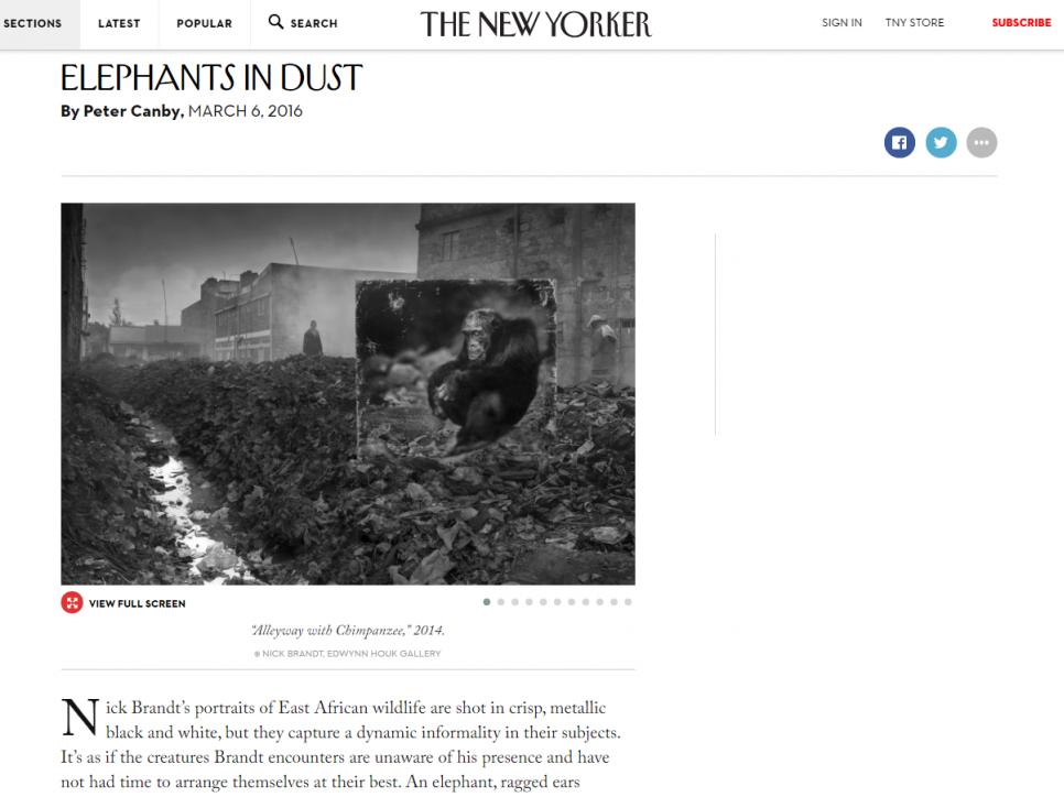 Nick Brandt: ELEPHANTS IN DUST - The New Yorker
