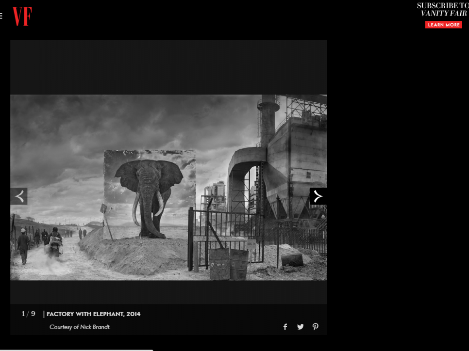 Nick Brandt: Haunting Photos of Endangered Animals in their Ruined Habitats - Vanity Fair Online
