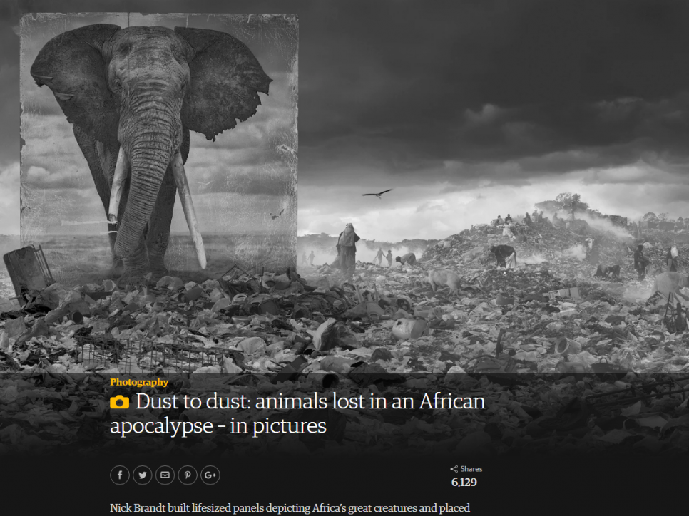 Nick Brandt: Dust to dust: animals lost in an African apocalypse – in pictures - The Gaurdian