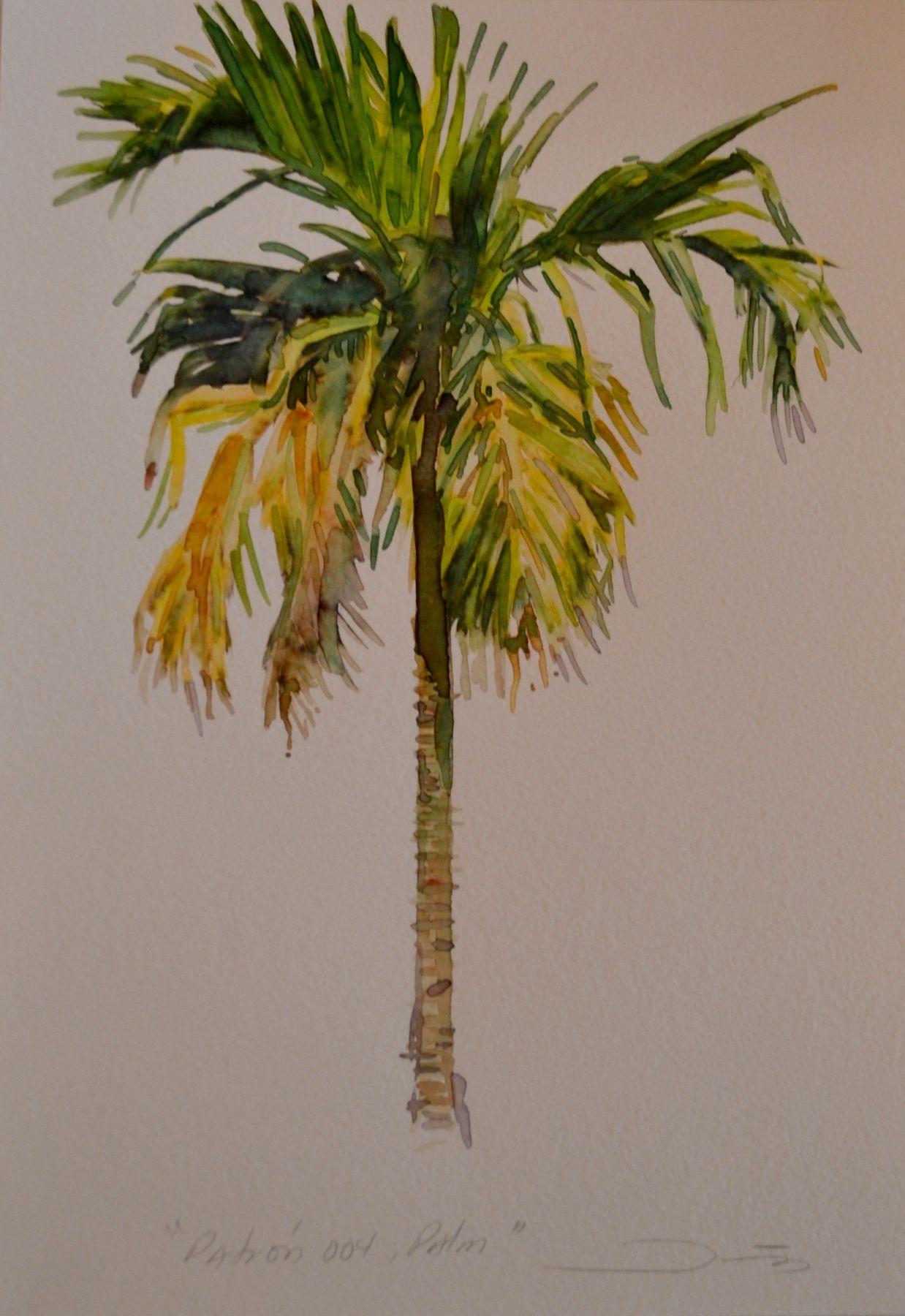 Patrón 004, Palm