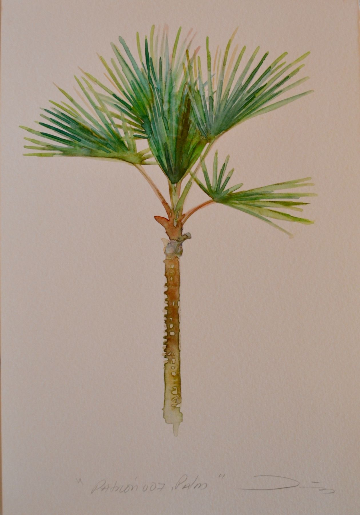 Patrón 007, Palm